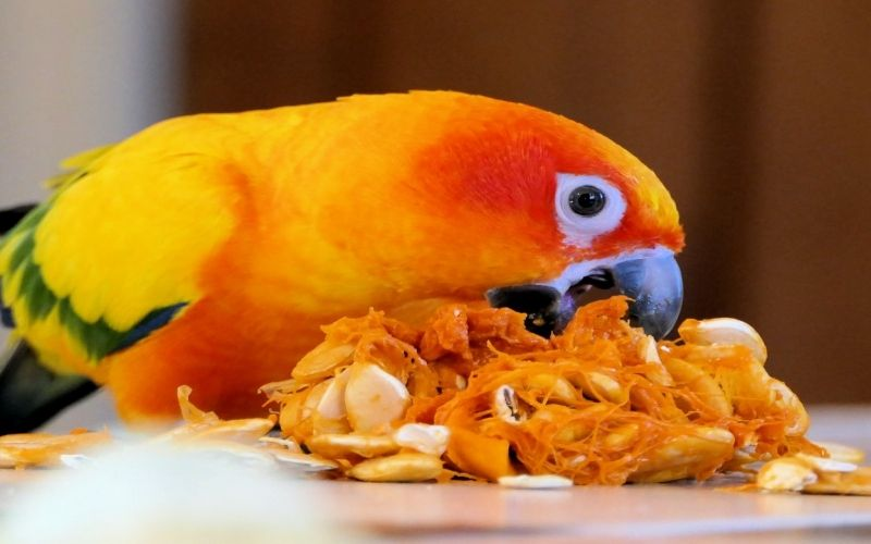 3 Ways to Know if a Conure Is Right for You