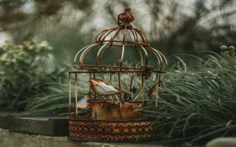 Types of bird cages