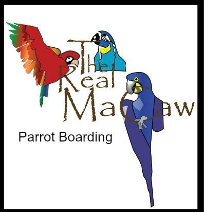 The Real macaw Parrot Boarding